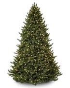 $500 - $599 Trees